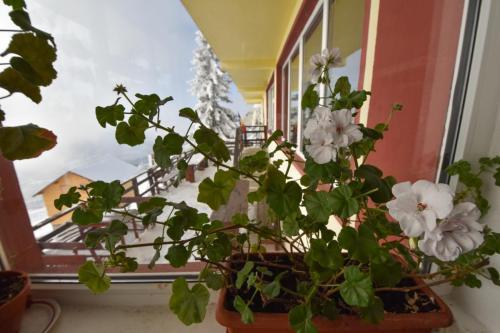 Vila interior (59)